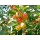 Плодово-ягодные кустарники и деревья
